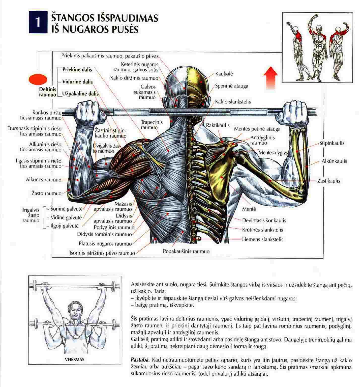 Stangos-spaudimas-uz-nugaros