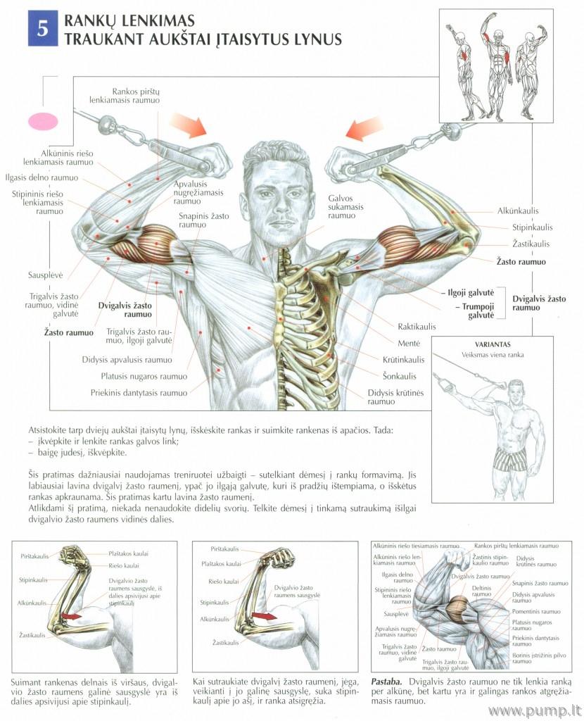 Bicepsas_lubu_lyno_trauka