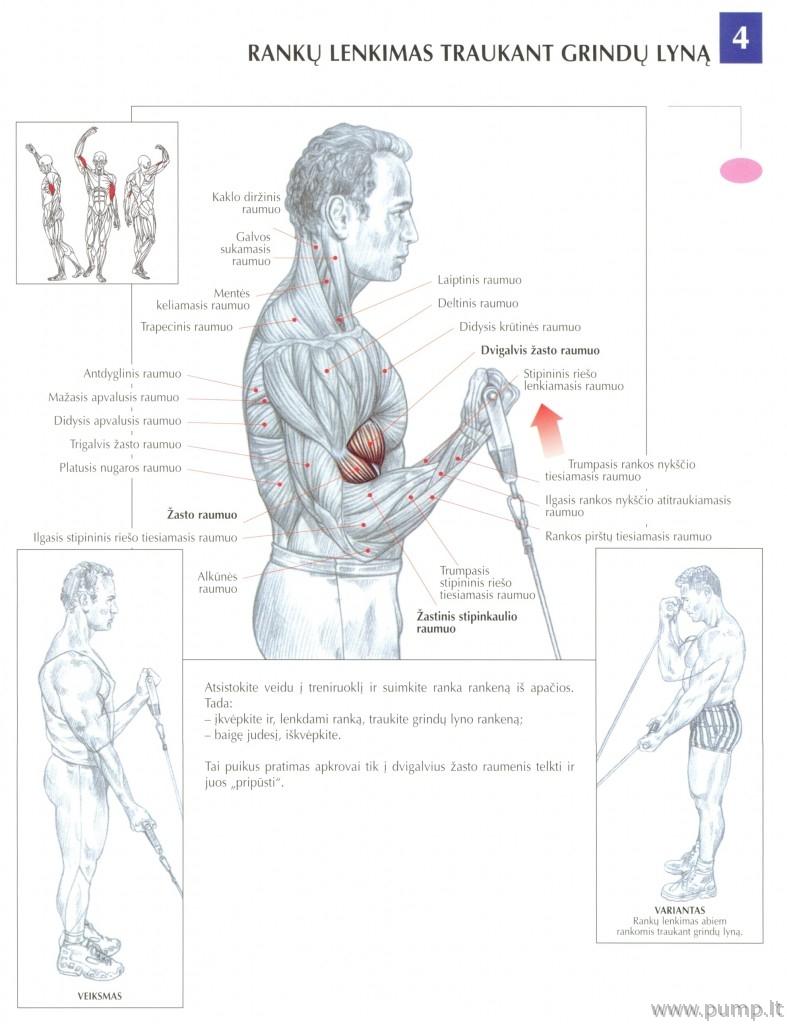 Bicepsas_su_apatiniu_trosu