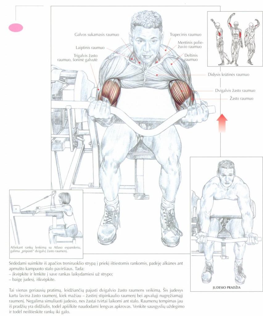ranku-lenkimas-bicepsui